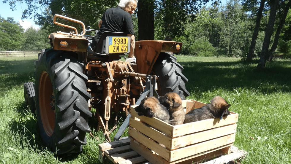 Balade en tracteur