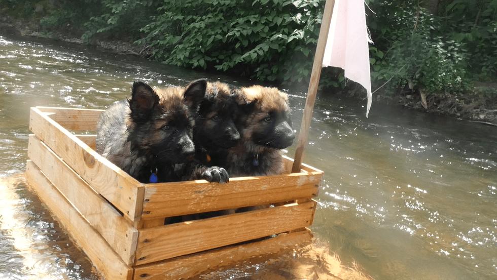 Initiation au rafting