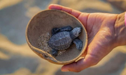 Mazunte: A Safe Home for Turtles