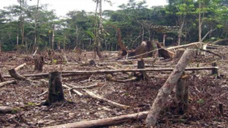 Deforestation in Malawi