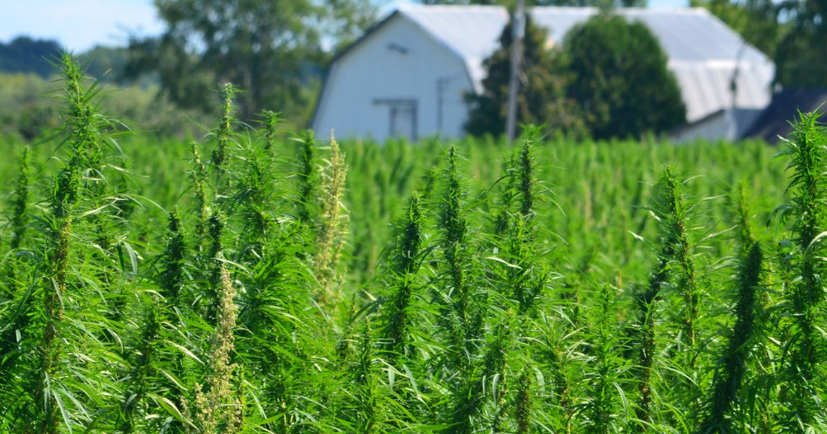 1531843114-BIZ-FARM-HEMP-DE
