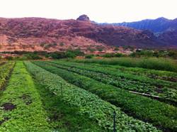 black-youth-farming