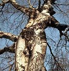 arbre-femme.jpg