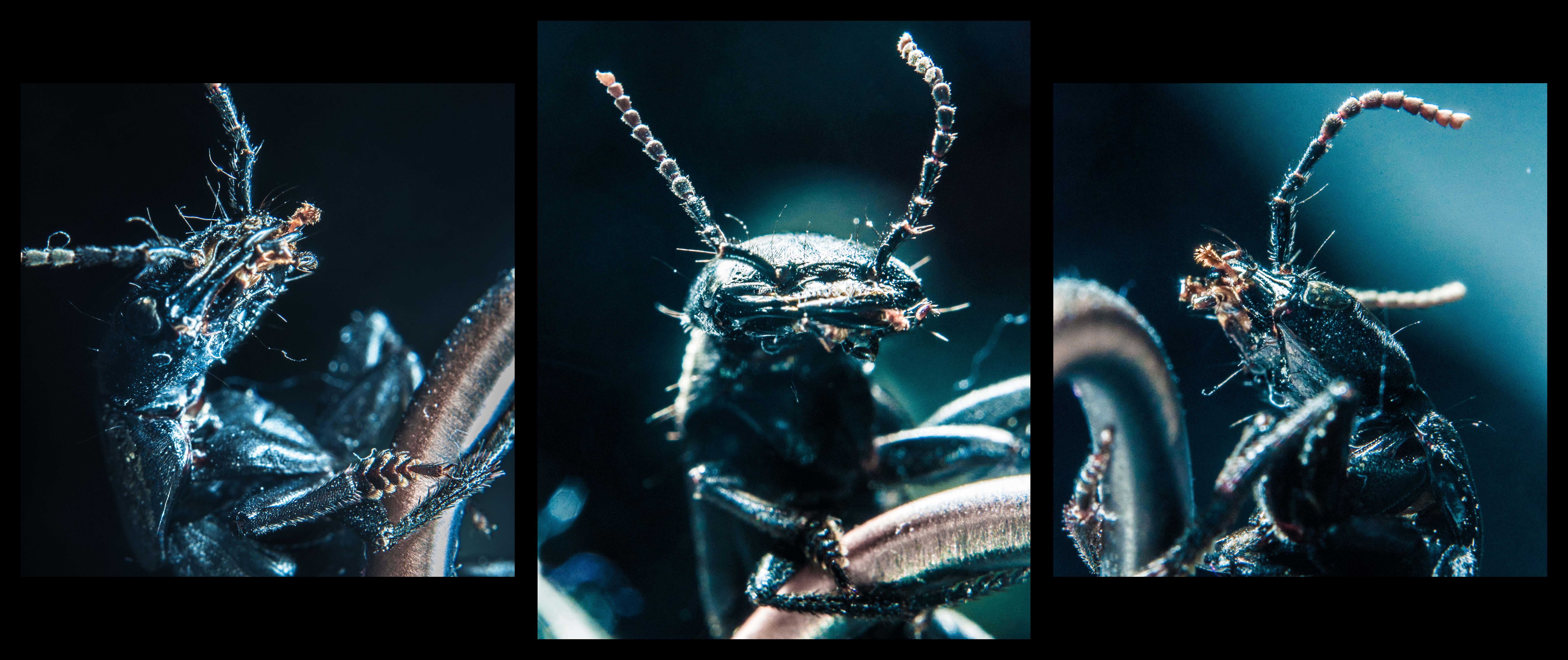 Beetle_Trip1