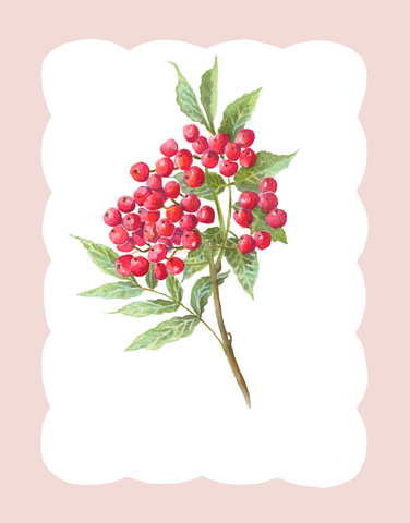 Winter Flora - Red Berries (altered red)