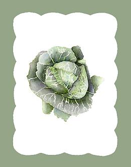 Cavolo (35.6cm x 27.9cm)