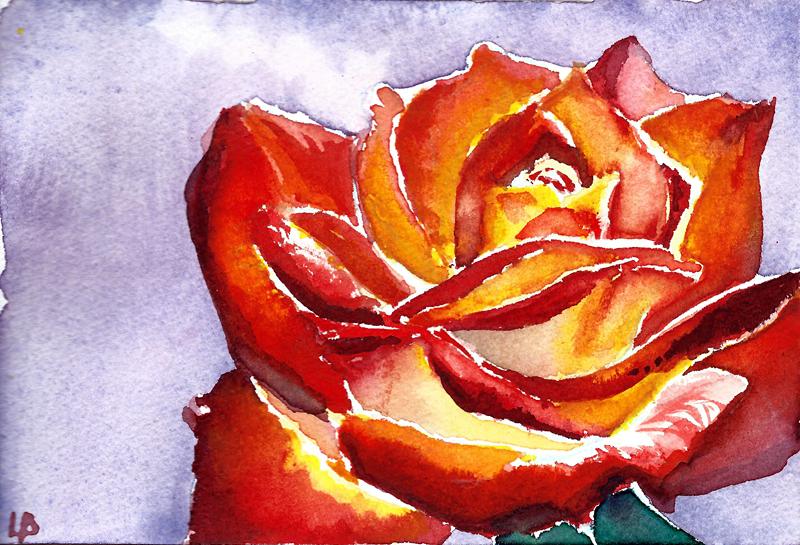 Rose velour