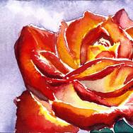 rose27022016small.jpg
