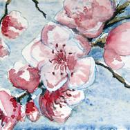 cerisier010116.jpg