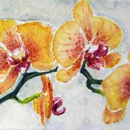orchidee170115.jpg