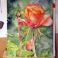 rose05_18_02.jpg