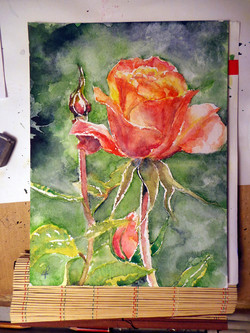 Rose mère