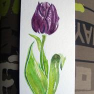 tulipe060116.jpg