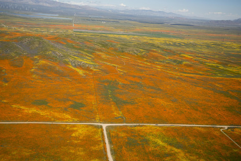 NASA Aircraft Captures Images Over Antelope Valley, California's Superbloom.
