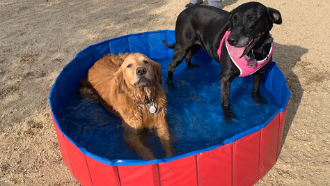 Summer Fun Returns to City of Palmdale's Yellen Dog Park