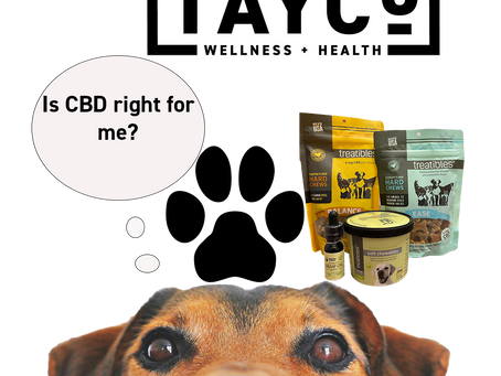 Treating Your Dog With CBD