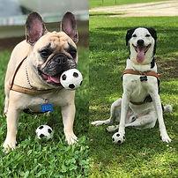 Fred & Juca nossos amiguinhos do parque!