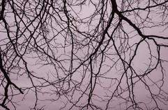 Same trees — no leaves