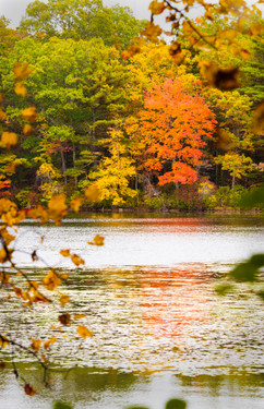 Maxwell Mays pond-507_Focus red tree.jpg