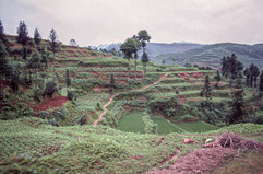 Road to Leshan - Terraces.jpg