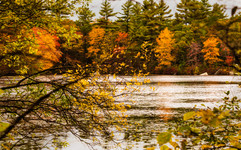 Maxwell Mays pond-510-Broad Color.jpg