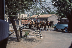Near Beijing - RR Crossing - Horse Cart & Tru