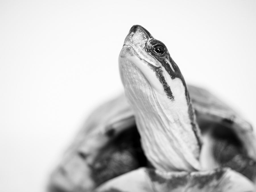 Turtles-4130296