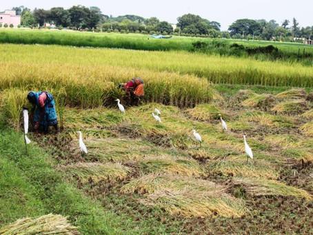 GIVING NEW LIFE: REHABILITATIVE WORK IN TSUNAMI-HIT AREAS
