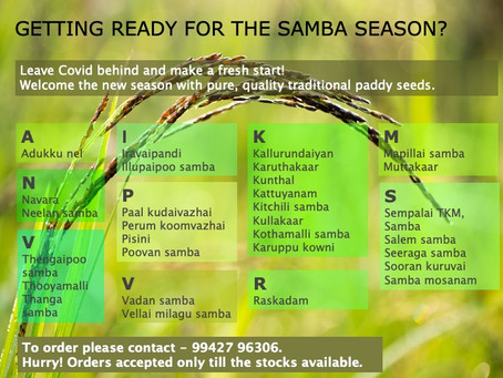 Welcome the new season with pure, quality traditional paddy seeds.