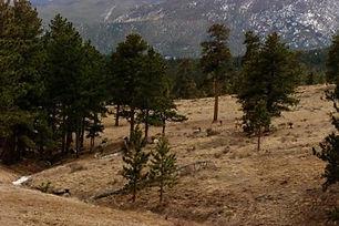 elk-hangout.jpg