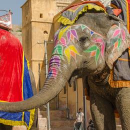 Incredible India | розовый город Jaipur