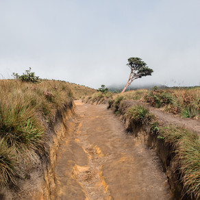 Trip to Sri Lanka. Прогулка над облаками или конец света существует. Плато Хортон - Horton Plains