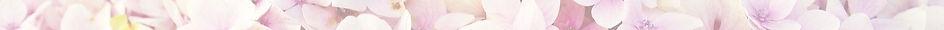 hydrangea-3659614_1920_edited_edited_edi