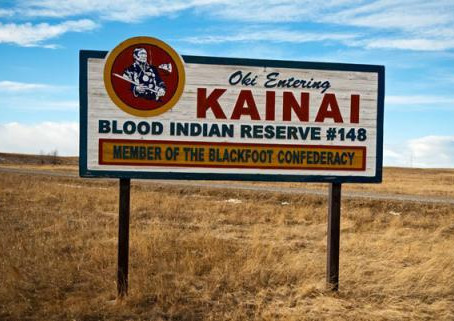 Horse Origins: As told by the Kainai (Blood First Nation)