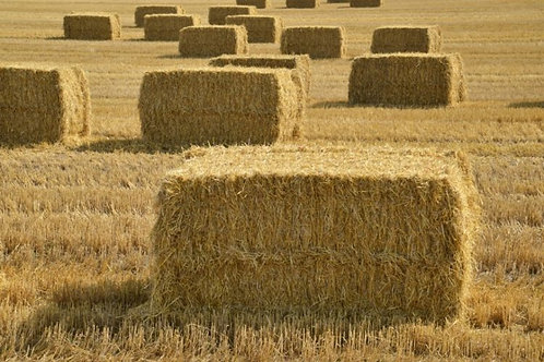(5) Square Hay Bales- Donation