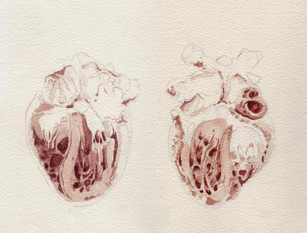 Heart cut in half