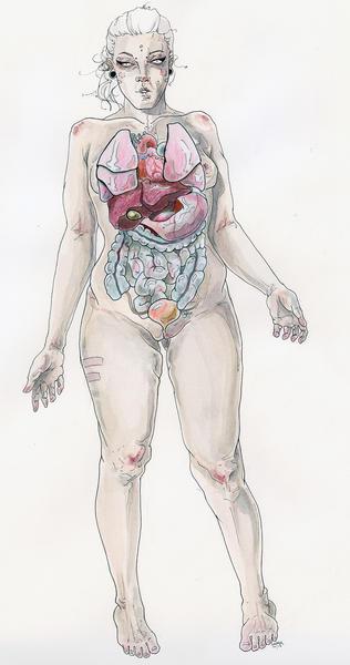 Anatomy Model with Organs