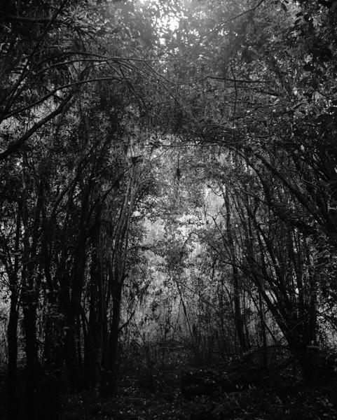 Forest Interiors