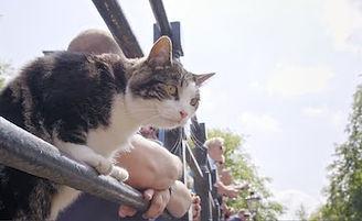 świat według kota.jpeg