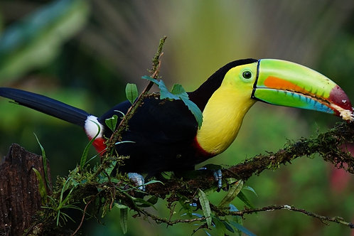 The Pura Vida of Costa Rica