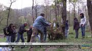 Imenottero giapponese salva i castagneti