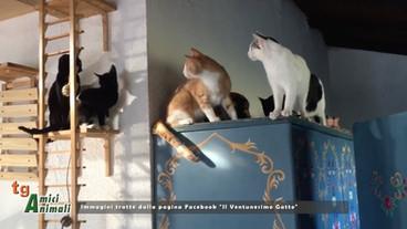 Il Ventunesimo Gatto, un'adozione del cuore