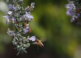 about us- env-pollinators.jpeg