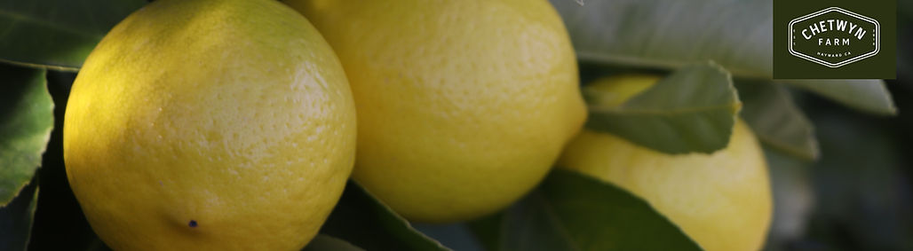 citrus banner.jpeg