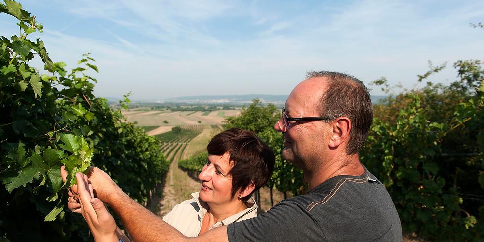 Weingartenwanderung