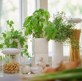 Självvattnande kruka för kryddväxter