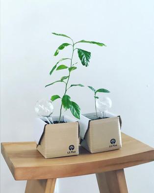 249 SEK  Det roligaste projektet du kan starta! Odla ditt eget träd med hjälp av detta kit.