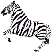 Zebra Super Shape