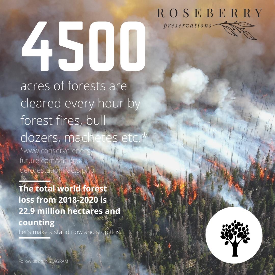 deforestation-2020.png