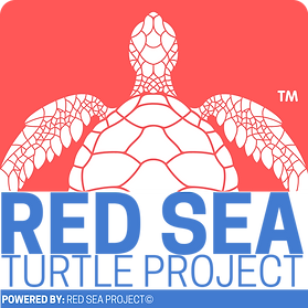 Red Sea Turtle Project.png